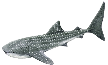 Whale-Shark-Identification