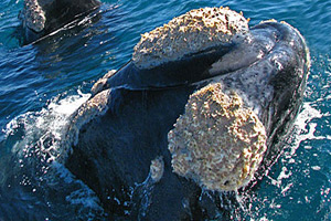 Wine and whale tour – 3 nights